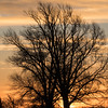 Willow sunrise silhouette at Flat Bridge, River Great Ouse