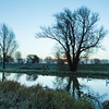 Sunrise behind old willow on River Great Ouse, between Aldreth Causeway and Queenholme