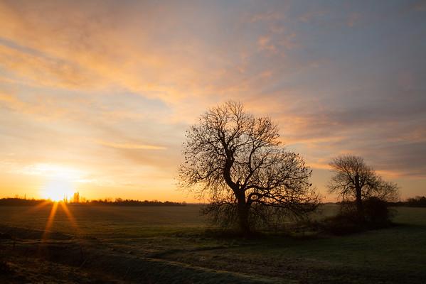 Sunrise behind the ash trees