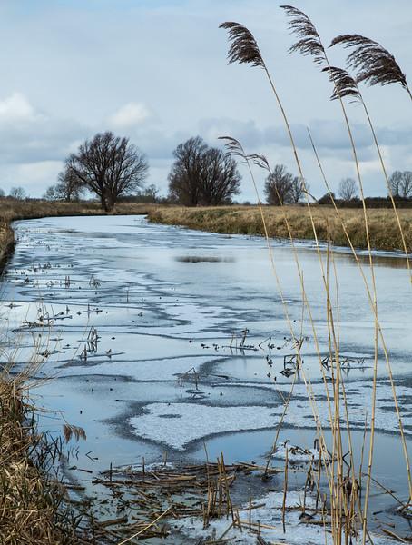 Reeds in a frozen Old West River near Flat Bridge, Willingham, Cambridgeshire