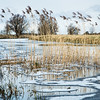 Reeds and reflections in a frozen Old West River, Flat Bridge, Willingham, Cambridgeshire