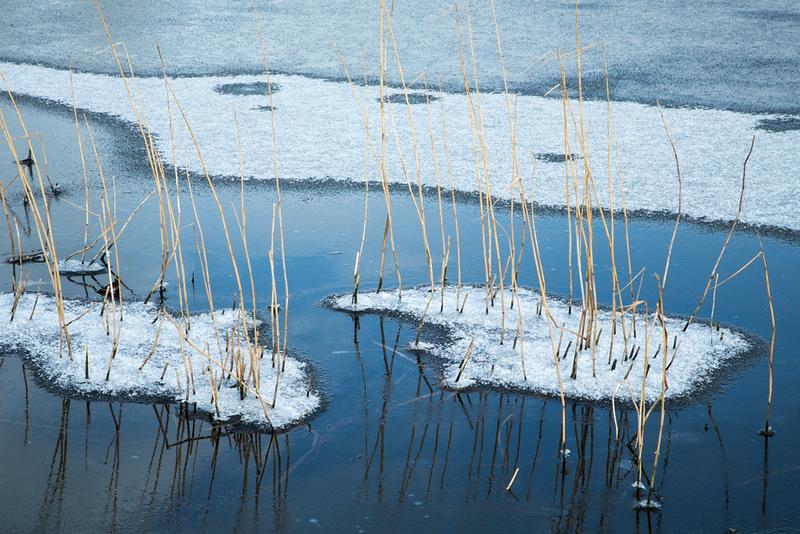 Frozen reeds (take 2) near Flat Bridge, Willingham, Cambridgeshire