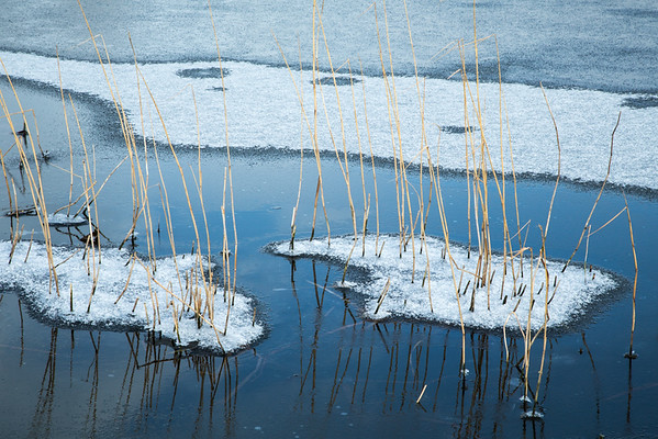 Frozen reeds (take 2) near Flat Bridge, Willingham, Cambridgeshire