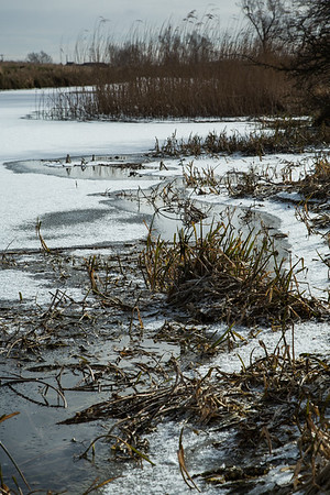 Sunlit rushes frozen into the Old West River near Flat Bridge, Willingham, Cambridgeshire