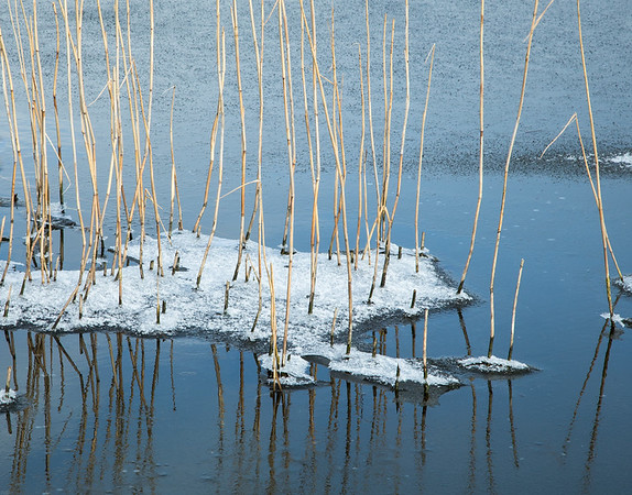 Frozen reeds (take 1) near Flat Bridge, Willingham, Cambridgeshire