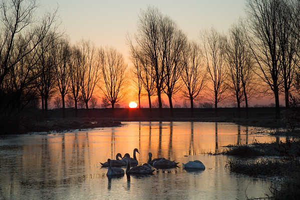 Frosty sunrise on the River Great Ouse