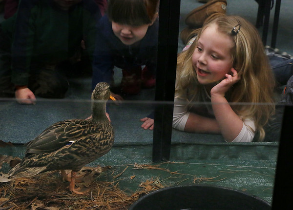 Meeting 'Mrs. Mallard'