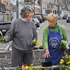 MIKE SPRINGER/Staff photo<br /> Frances Fleming, left, and Beverly Bernhard of the Rockport Garden Club plant flowers Friday morning at Dock Square in Rockport.<br /> 4/13/2018