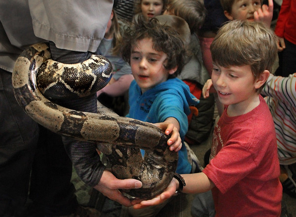"MIKE SPRINGER/Staff photo<br /> Seven-year-old Devin Peavey, left, and Stefan Dackert, 6, touch a red-tailed boa constritctor native to South America during a vacation-week ""Curious Creatures"" presentation Tuesday at the Manchester Public Library.<br /> 4/17/2018"