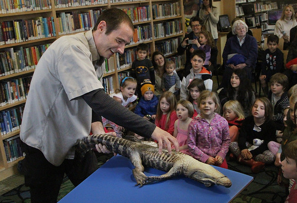 "MIKE SPRINGER/Staff photo<br /> Corey Kummel of Haverhill demonstrates how an alligator loses conciousness after he places it on its back and rubs its belly during a ""Curious Creatures"" presentation Tuesday at the Manchester Public Library.<br /> 4/17/2018"