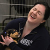 "MIKE SPRINGER/Staff photo<br /> Rosie Kenney of Haverhill plays with a puppy during a ""Puppy Party"" fundraiser Tuesday at Cape Ann Animal Aid's William Cutler Rich Shelter in Gloucester. For a $10 donation, guests were invited to play with four puppies that will soon be offered for adoption.<br /> 4/17/2018"