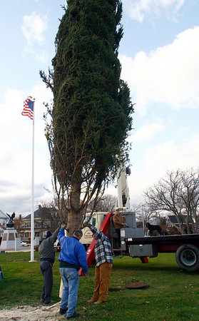 Gloucester: Ringo Tarr, Bob Francis, State Senator Bruce Tarr, and Ken Talindoros (with his dog, Karma) of Great Eastern Marine Service, position an Eastern Fir from Shelburne, Nova Scotia at Kent Circle yesterday. The tree will be decorated this weekend and the lighting ceremony will take place Thanksgiving weekend. Photo by Kate Glass/Gloucester Daily Times Tuesday, November 11, 2008