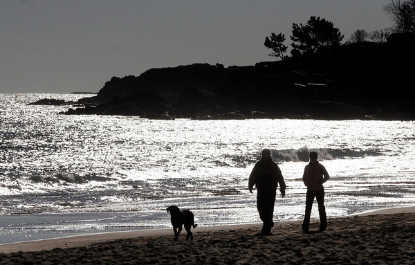 Manchester: Rob and Sherry Brinle of Beverly walk their dog Bruschi at Singing Beach in Manchester on Wednesday. The dog is named after the Patriots player Tedy Bruschi. Photo by Kate Glass/Gloucester Daily Times Wednesday, December 3, 2008