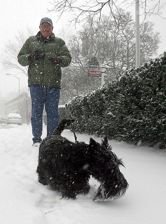Manchester: Richard Eustice walks his dog, Angus Sirloin, down Union Street in Manchester during yesterday's snowstorm. Despite his size, Angus loves the snow. Photo by Kate Glass/Gloucester Daily Times Wednesday, December 31, 2008