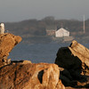Rockport: Birders spotted 6 snowy owls, such as this one at Loblolly Cove in Rockport, during the 79th Annual Christmas Count on December 14th. Photo by Kate Glass/Gloucester Daily Times Tuesday, December 16, 2008