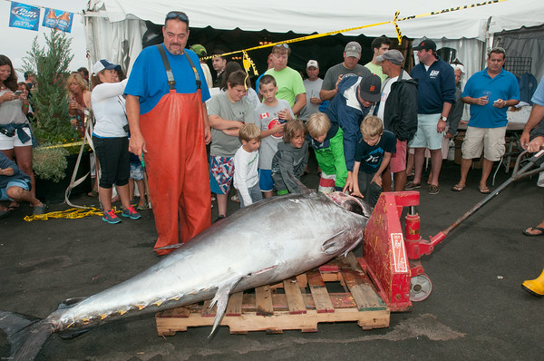 DESI SMITH/Staff photo.  Weigh Master Ricky Schrafft,( left) of Compass Seafood, looks over a 588 lb Blue Fin Tuna, as young children get to touch the biggest catch of the day, caught by Captain Anthony Caturano of the Tonno out of Gloucester, along with Captain Mark Kooskal and Dan Reddy, at the 3rd Annual Bluefin Blowout Tuna Tournament Sunday afternoon at the Cape Ann Marina.   August 2,2014