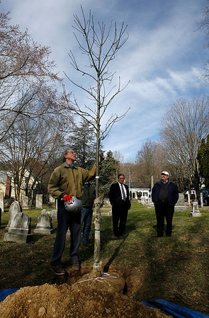 Manchester: George Smith, President of Friends of Manchester Trees, examines a red oak that was planted in Union Cemetery by O'Brien's Landscape & Tree Services in honor of Mike Costello, who headed the Cape Ann Chamber of Commerce for 30 years. At the ceremony were Rudy Macchi, center, Mike Costello, right, Bill Scott, not shown, and Jack O'Brien, not shown. Photo by Kate Glass/Gloucester Daily Times Wednesday, April 15, 2009