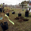 Manchester: Tom Aldrich, right, of R.P. Lations Tree Service helps plant 60 shrubs around the pond at Winthrop Field in Manchester as part of a restoration project sponsored by the Winthrop Field Committee and Friends of Manchester Trees. The land was given to the town by Clara Winthrop and the restoration project will bring native plants back to the area. Photo by Kate Glass/Gloucester Daily Times Wednesday, April 8, 2009