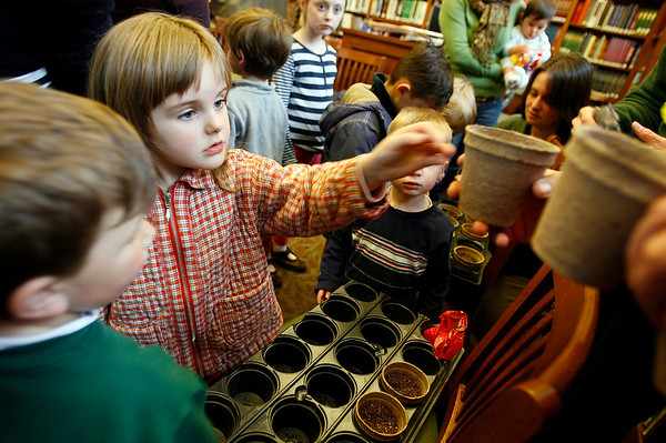 """Manchester: Bella Wright, 3, takes a pot with yardlong bean seeds during a Family Edible Gardens program at the Manchester Public Library yesterday afternoon. Barbara Emerson of """"Have Green Thumb"""" showed the children how to nurture a seed into a plant. Photo by Kate Glass/Gloucester Daily Times Tuesday, April 7, 2009"""
