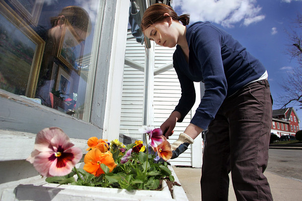 Rockport: Rachel Douyard plants pansies in the window box in front of her family's business, The Michael Stoffa Gallery, on Main Street Thursday afternoon.  Rachel said that every spring they plant pansies in the window boxes because they are hardy flowers and can survive the cold weather. Mary Muckenhoupt/Gloucester Daily Times