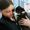 Gloucester: Remi Sonia, 11, of Rockport holds Skippy, who is partially blind, as she learns how to volunteer at Cape Ann Animal Aid yesterday. She is part of the Jane Goodall Roots and Shoots program, which encourages community service. Even though Goodall has studied chimpanzees for nearly 50 years, she told some Rockport students last year that dogs are her favorite animal because of their affection and service to all kinds of people, whether they are disabled or just in need of companionship. In that spirit, the local students in this year's group are showing community service by volunteering to walk dogs at the local shelter. Photo by Kate Glass/Gloucester Daily Times Tuesday, April 21, 2009