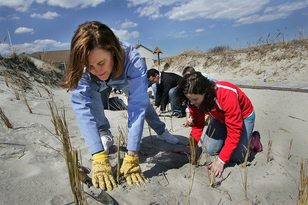 Gloucester: Sue Prakken plants beach grass at Good Harbor Beach along with fellow Gorton's employees, including Lauren Fournier, right, Thursday afternoon.  About fifty Gorton's employees came to the beach and planted 3,900 beach grass plants in less than an hour. Mary Muckenhoupt/Gloucester Daily Times