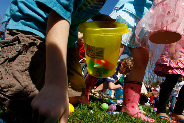 Rockport: Kids grab candy and eggs off the lawn at Millbrook Meadow during the annual Easter egg hunt Saturday afternoon.  Kids were allowed to each take one plastic egg and as much candy as they could find. Mary Mcukenhoupt/Gloucester Daily Times