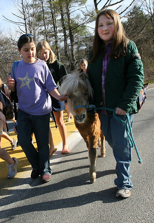 """Essex: Rebecca Braimon pats Hope as Veronica Attridge guides the miniature horse alongside a """"walking school bus"""" to Essex Elementary School yesterday morning. Photo by Kate Glass/Gloucester Daily Times"""