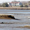 Gloucester: Clammers dig in the flats along the Little River on Tuesday afternoon. Photo by Kate Glass/Gloucester Daily Times