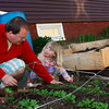 Gloucester: Stevens Brosnihan picks out weedns with his daughter Beatrix,3, in front of their Beacon Street home Friday evening. Brosnihan and his wife Lara Lepionka have transformed most of their yard space into organic gardens. Mary Muckenhoupt/Gloucester Daily Times