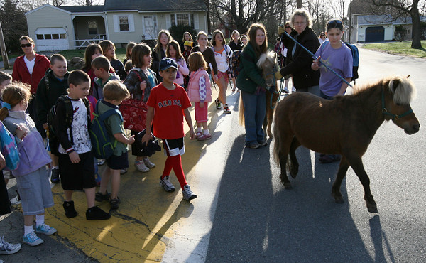 """Essex: Faith, a miniature horse, leads the way to Essex Elementary School yesterday morning as dozens of students form a """"walking school bus"""" to the school from the police station. The walking school bus has been ongoing for a few years, but was suspended during the winter months because of inclement weather. Photo by Kate Glass/Gloucester Daily Times"""