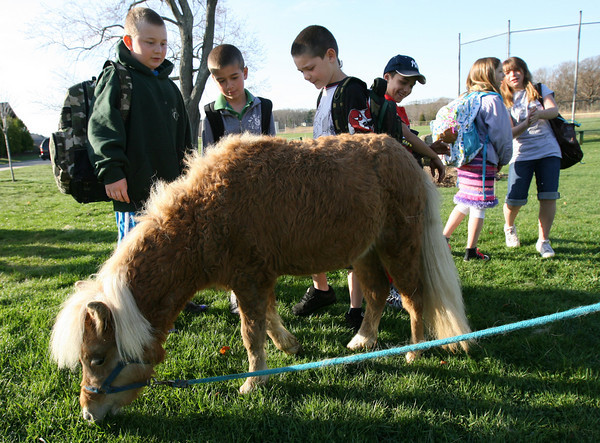 """Essex: Henry Doane, Sam Fraser, Sal Bila, and Kendall Hersey check out Hope, a miniature horse, at Memorial Field before forming a """"walking school bus"""" to Essex Elementary School yesterday morning. Dozens of children walked to school as part of the bus, which was led by the horses. Photo by Kate Glass/Gloucester Daily Times"""