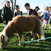 "Essex: Henry Doane, Sam Fraser, Sal Bila, and Kendall Hersey check out Hope, a miniature horse, at Memorial Field before forming a ""walking school bus"" to Essex Elementary School yesterday morning. Dozens of children walked to school as part of the bus, which was led by the horses. Photo by Kate Glass/Gloucester Daily Times"