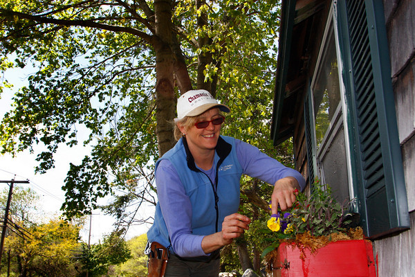 Essex: Maureen Duncan of Flowerscapes by Maureen deadheads some flowers in a window box on her property on Western Avenue in Essex Thursday afternoon. Mary Muckenhoupt/Gloucester Daily Times