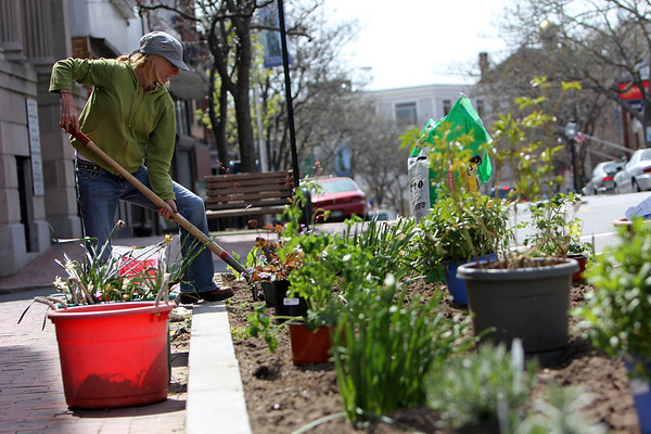ALLEGRA BOVERMAN/Staff photographer. Gloucester Daily Times. Gloucester: Patti Amaral of Clean City Initiative, plants perennials, mostly paid for by Gloucester Civic & Garden Council, Inc., in a spot at the corner of Main and Duncan Streets in Gloucester on Monday.