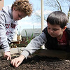 ALLEGRA BOVERMAN/Staff photo. Gloucester Daily Times. Gloucester: First graders at Veterans Memorial Elementary School were planting yellow beet seeds are Carson Harwood and Logan Strangman. They were also dissecting and studying beans and seeds on Friday afternoon at the school.