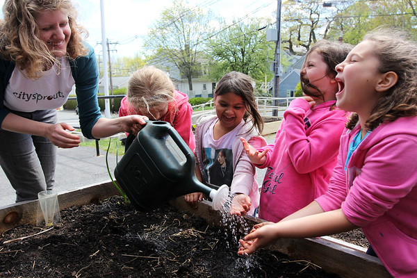 ALLEGRA BOVERMAN/Staff photo. Gloucester Daily Times. Gloucester: First graders at Veterans Memorial Elementary School were planting yellow beet seeds, dissecting and studying beans and seeds on Friday afternoon at the school. From left are FoodCorps service member serving with CitySprouts, Sarah Rubin, pouring cold water over the hands of some of the kids who were planting seeds not only to clean their hands but to spread water over the seeds. Next to her are: Emily Palazola, Emaliese Peralta, Daniela Aiello and Emma Frontiero.