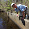 ALLEGRA BOVERMAN/Staff photographer. Gloucester Daily Times. Gloucester: Eric Hutchins, the habitat restoration specialist at NOAA, checks on the status of the Little River Fish Ladder off Magnolia Avenue on Tuesday morning.
