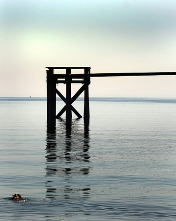 A dog swims toward the newly reconstructed Greasy Pole structure in Gloucester Harbor off Pavilion Beach on Monday morning. Jesse Poole/Gloucester Daily Times April 16, 2012