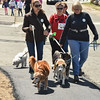 Desi Smith/Staff photo.  Many walkers walked their dogs in support of the Cape Ann Animal Aid during the 29th Annual Pride Stride Walk that started and ended at Stage Fort Park Sunday afternoon.   April 24,2016