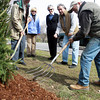 DAVID LE. Gloucester Times. From left, Friends of Manchester Trees President George Smith, Director Judi Shipman, Director of the Memorial Tree Program Mimi McDougal, and Director Joe Sabella, watch as Jack O'Brien, of O'Brien's Landscape and Tree service begins to spread mulch around a newly planted Norway Spruce tree near the exit of the high school on Friday morning. 4/22/11.