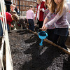 Gloucester: Alexa Clements, a first grade student at East Gloucester Elementary School, waters a garden bed in front of the school after her class planted peas in the garden. Several parents organized the project and hope to have a garden at every elementary school in the city. Seeds were donated through a grant and compost was donated by Wolf Hill Garden Center. Photo by Kate Glass/Gloucester Daily Times