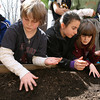 Gloucester: Ryan Bergin, Brandi Parks and Sara Wheeler, all fourth grade students at East Gloucester Elementary School, plant lettuce seeds in front of the school. Last year the students planted pumpkins before summer vacation and they grew in time for the beginning of this school year. The lettuce should be ready to harvest in six weeks. Photo by Kate Glass/Gloucester Daily Times