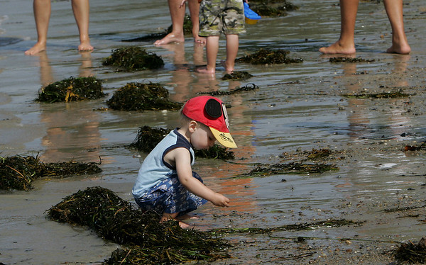 Gloucester: Brendan Sheehan, 2, of Gloucester looks for rocks while waiting with his family for his father to finish the annual Clean Harbor Swim at Niles Beach Saturday morning. Mary Muckenhoupt/Gloucester Daily Times