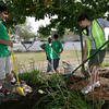 Gloucester: Chris Frontiero, Philip Nearis and Jacqueline Gross spread mulch at Gordon Thomas Park near the Jodrey State Fiesh Pier yesterday afternoon. Reuben James, rear, who has been supervising members of the YMCA Clean Team, says 150 local teens have participated in the program this summer maintaining Gloucester's public parks as well as Main Street. Photo by Kate Glass/Gloucester Daily Times
