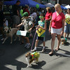 Gloucester: The dog parade walks down Main Street Saturday morning to benefit the Cape Ann Animal Aid. Mary Muckenhoupt/Gloucester Daily Times