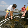 Gloucester: Daniel Likoff of Newton Thomas Kaupelis of Westford and search through a low tide quadrant near the Eastern Point Lighthouse as Dave Wedge of the New England Aquarium looks on yesterday afternoon. The kids, who are attending camp at the New England Aquarium, were collecting marine science data. Photo by Kate Glass/Gloucester Daily Times