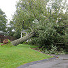Gloucester: A large tree fell against a home on _________Sunday afternoon.  Desi Smith /Gloucester Daily Times. August 28,2011