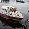 David Le/Gloucester Daily Times. Brian Miller, of Manchester, manuevers his boat onto the trailer in Manchester Harbor in preparation for the impending Hurricane Irene this weekend. 8/25/11.