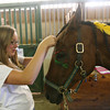 Isabel Clark braids Montana's mane as she prepares the horse for Native American Day at Seaview Farm as part of their summer camp on Friday. Kids painted the horses with traditional designs and took them out on the trails. Photo by Kate Glass/Gloucester Daily Times